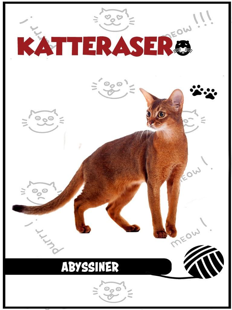 Abyssiner