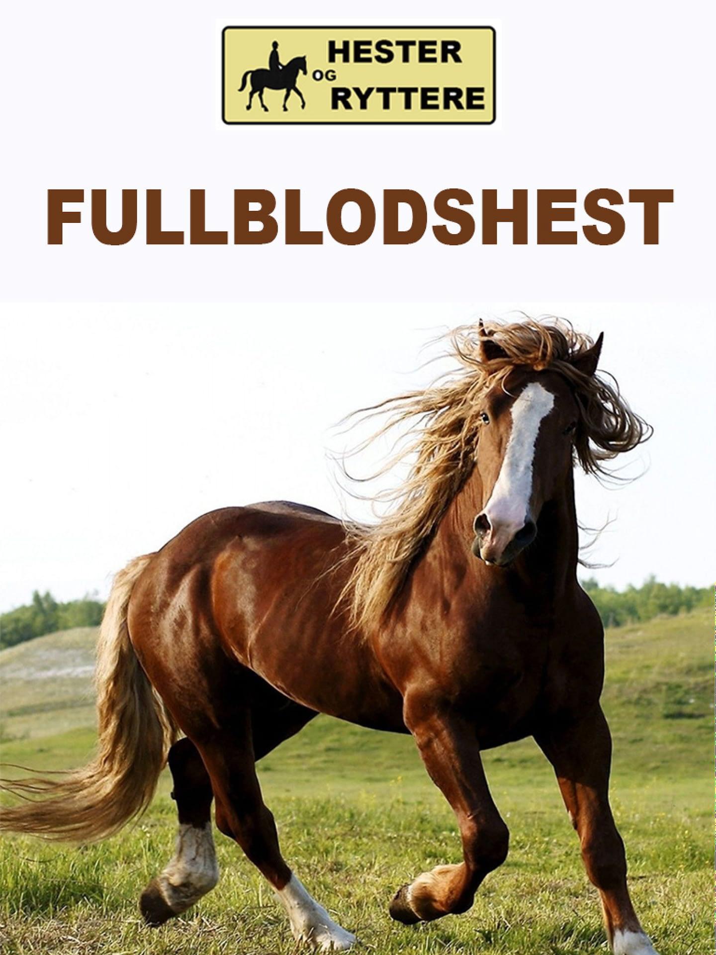 Fullblodshest
