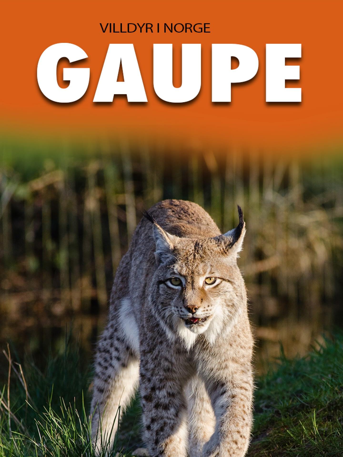 Gaupe