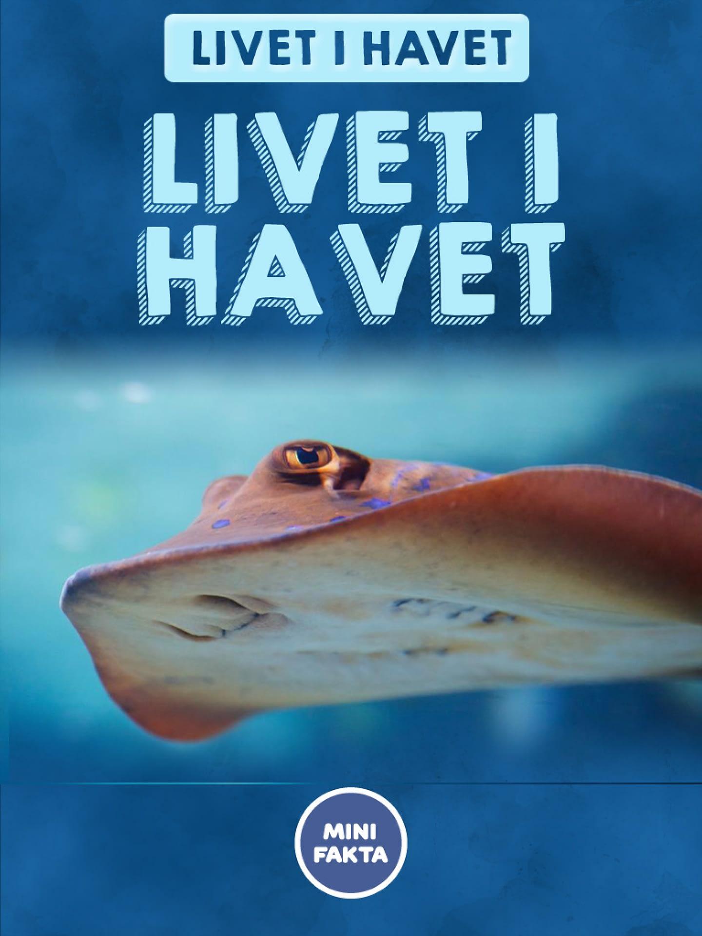 Livet i havet Minifakta