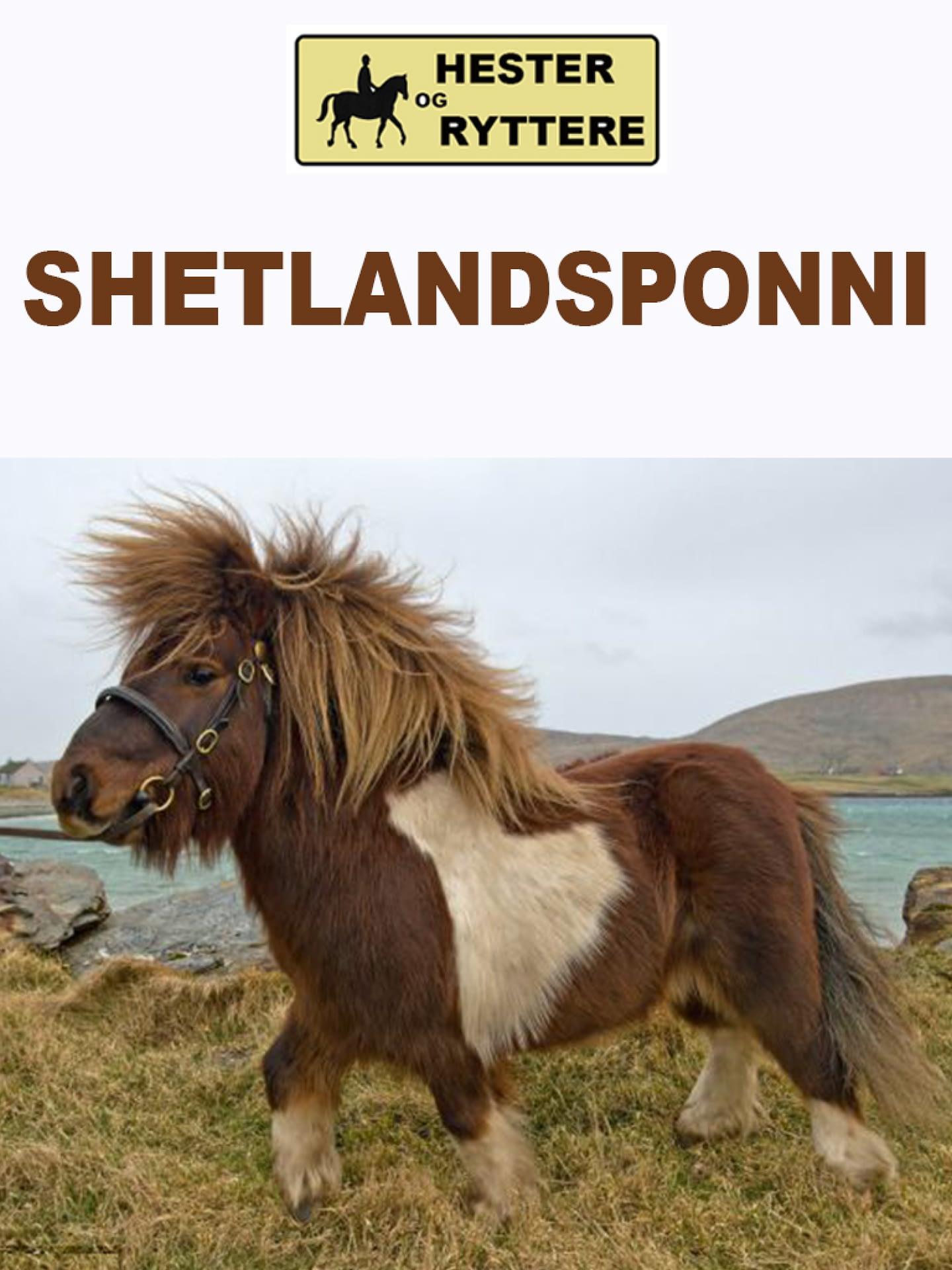 Shetlandsponni