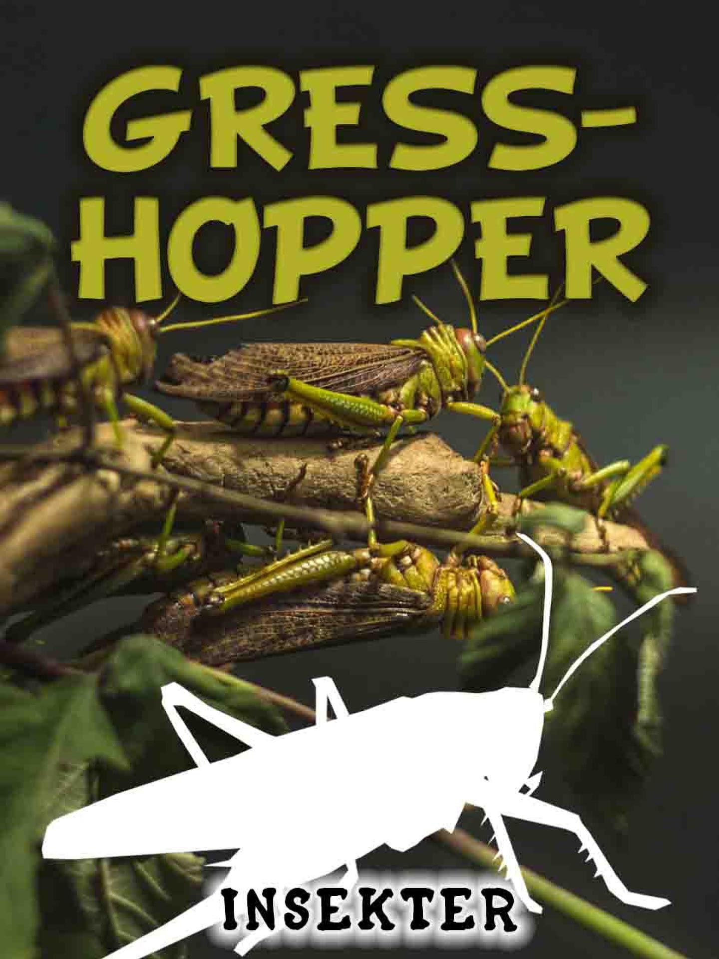 Gresshopper